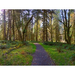 Spruce Trail - Hoh Rainforest