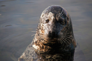 See it in the web store.Harbor Seal - Sun and Shadow